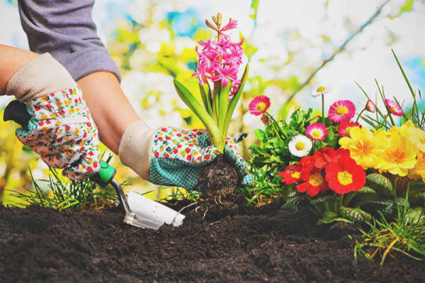 Person planting flowers in dirt
