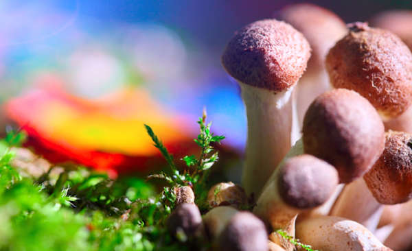 a cluster of mushrooms growing out of the grass